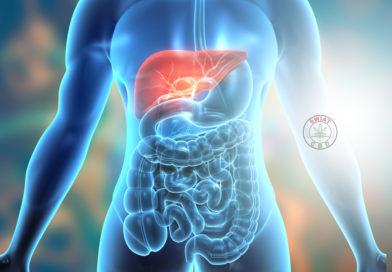 Rola kannabinoidów w stanach zapalnych błony śluzowej przewodu pokarmowego