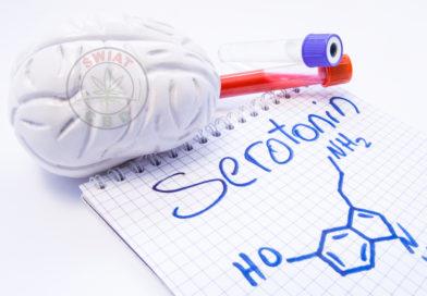 CBD i serotonina