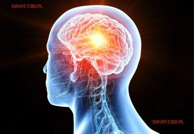 Czy olej CBD wspomaga neurogenezę?