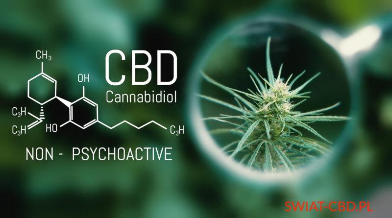 CBD a ADHD (zespół nadpobudliwości psychoruchowej)